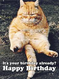 template free birthday ecards singing cats with free animal birthday cards gangcraft net
