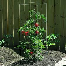 amazon com panacea products 89730 4 panel tomato and plant