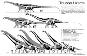 thunder lizard size comparison by scotthartman on deviantart
