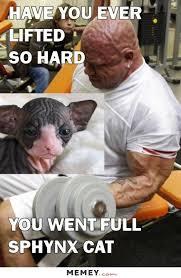 Builder Meme - body builder memes funny body builder pictures memey com