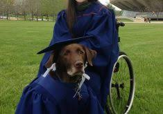dog graduation cap and gown stunning dog graduation cap and gown images best image engine