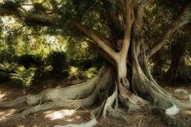 unique tree species around the world