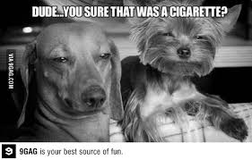 Stoned Dog Meme - pin by danny hanna on the stoned dog meme collection pinterest