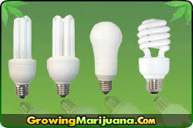cheap grow lights for weed cfl grow lights compact fluorescent grow marijuana