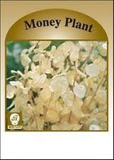 flower seed packets flower seed packets ebay