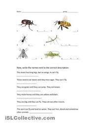 insects worksheets free worksheet pdf insects worms