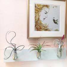 hanging air plant tillandsia wall fountain diy hanging air plants easy to grow