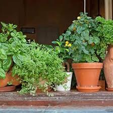 herb garden indoor indoor herbs are better than houseplants mother earth news
