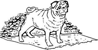 pug dog coloring free printable coloring pages