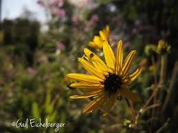 native plants of tennessee clay and limestone wildflower wednesday autumn equinox in flower