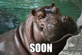Hippo Memes - soon hungry hippo quickmeme