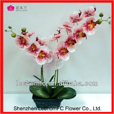 orchid plants for sale orchid plants for sale fiori idea immagine