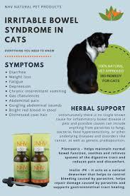 best 25 cat symptoms ideas on pinterest cat health emt