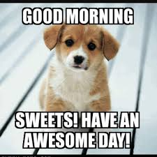 Sunday Morning Memes - the 25 best funny good morning memes ideas on pinterest derp