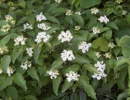types of native plants shrubs plants names shrubs native plants of hawaii beautiful