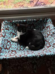 Homemade Cat Hammock by Diy Cat Hammock Idea