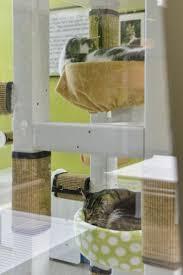Cat Treehouse Photos Inside Chicago U0027s Long Awaited First Cat Cafe U0026 Its High