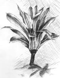 bali palm tree sketch by artnlou on deviantart