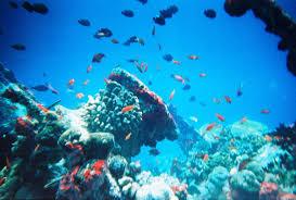marine ecosystem wikipedia