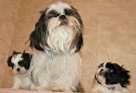 Black and White Dog Names Dog Names Pinterest