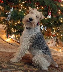 the tipsy terrier pub gift ideas for the wire fox terrier lover