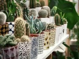 plantes dans la chambre épinglé par katherine f sur home garden inspiration déco