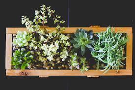 Succulent Planter Diy by Succulent Planter Diy For Under 10 Weed U0027em U0026 Reap