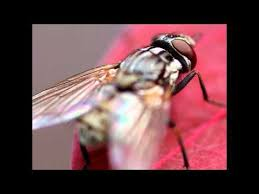 How To Get Rid Of Flies In The Backyard by The 25 Best Flies Outside Ideas On Pinterest Killing House