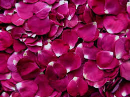 fresh petals real flower petals petals petal confetti biodegradable