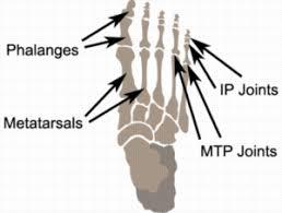 Foot Ligament Anatomy Sprained Toe Toe Injury Toe Sprain Physioadvisor