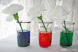 at home science experiments for kids