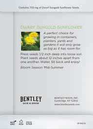 sunflower seed packets put your roots seed packet bentley seeds