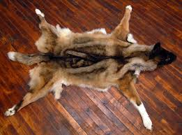 Bare Skin Rug Diamond Tooth Taxidermy