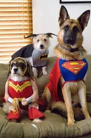 Halloween Costumes Dogs Cutest Puppy Costumes 2011 20 Dog Costumes Costume Wall