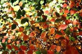 colorful autumn leaves texture picture free photograph photos
