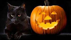 halloween cat meme happy halloween wallpaper and background 1366x768 id 447334