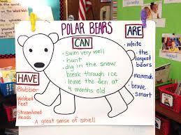 polar bear anchor chart best of first grade pinterest anchor