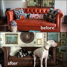 Leather Sofa Dye Repair by Our Walnut Leather Dye Transforms This Chesterfield Sofa Real