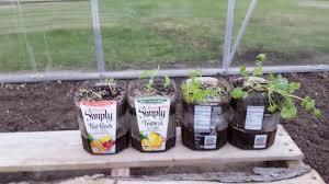 Diy Self Watering Herb Garden Diy How To Make Self Watering Planters Recycle Trash Youtube