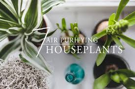 Best Indoor Plants For Oxygen by 7 Best Air Purifying Houseplants Freytags Florist
