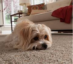 what type of carpet is best for dogs carpet vidalondon