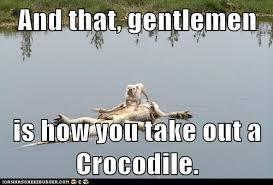 Crocodile Meme - the new crocodile hunter animal capshunz funny animals animal