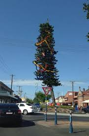 is lismore s tree the worst in the state daily telegraph