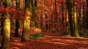 cute autumn backgrounds beautiful autumn hd wallpapers 1920x1080 autumn 1920x1080