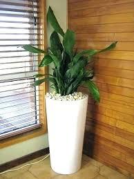 decorative indoor plants decorative house plants marvelous decorative indoor plants green