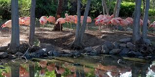 birds denver zoo