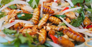 insectes dans la cuisine allons nous consommer des insectes et des micro algues d ici
