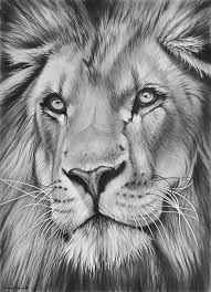 richard symonds wildlfe artist wildlife gallery dibujo