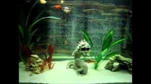 my 29 gallon aquarium