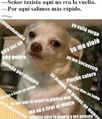 Memes De Chihuahua - memes perro chihuahua enojado google search funny pinterest